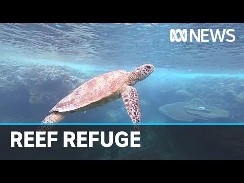 Lady Elliot Island to become refuge for marine life | ABC News