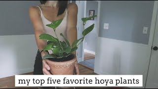 my top five favorite hoya plants | easy care plants