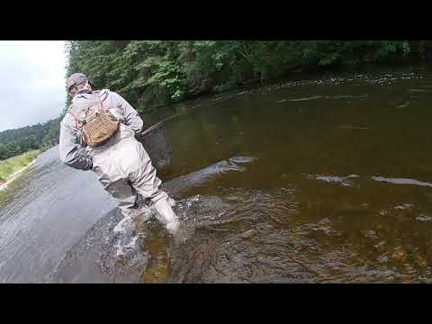 River Tweed Fly Fishing