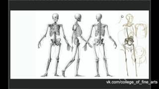 Анатомия и рисунок. Скелет