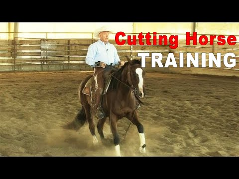 How To Train A Cutting Horse Prospect On The CowTrac Mechanical Cow