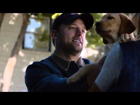 Budweiser Puppy Love Super Bowl Commercial 2014 - Clydesdale