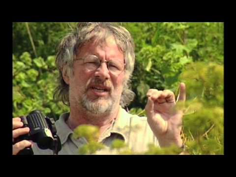 Birding with Bill Oddie