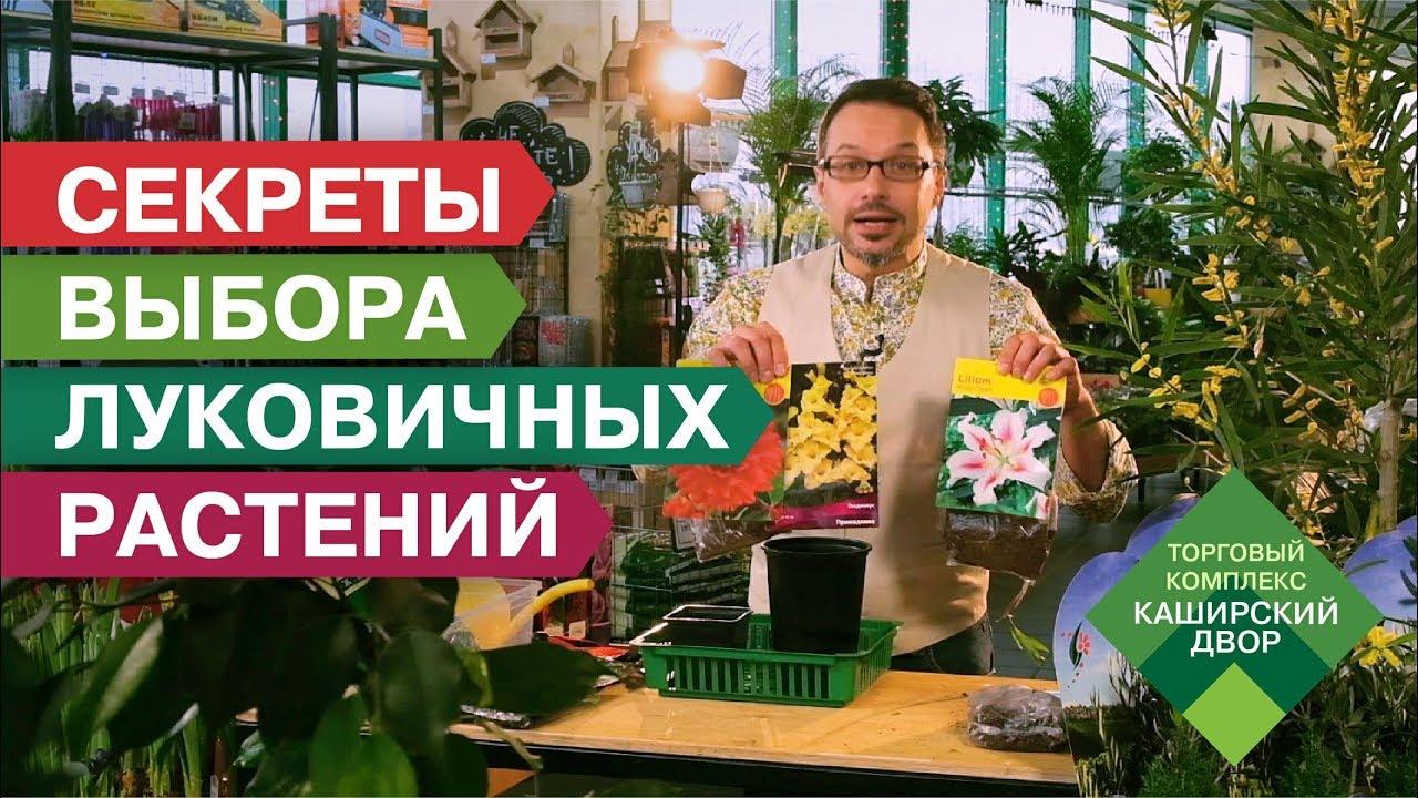 ЛУКОВИЧНЫЕ ЦВЕТЫ: как выбрать и какие сажать весной? Многолетние цветы | Секреты посадки | Лук-севок