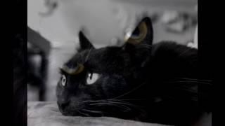 Мои стихи о животных.  Мёртвые котята.