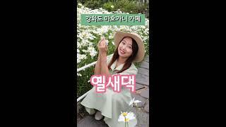 (옐새댁 Vlog) 강화도 여행코스 || 핫플 || 마…