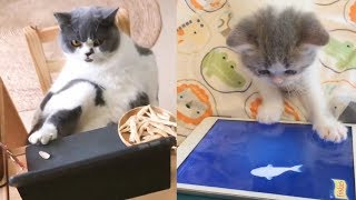 Cat Reaction to Tech Product - Funny Cat with Tech Product