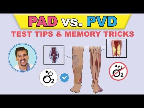 PAD Vs  PVI  Cartoon Animation & Memory Tricks   Peripheral Arterial Disease Pathophysiology, Signs