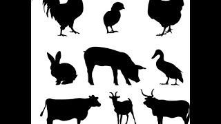 Apprendre le Suédois - Vocabulaire Les animaux et les insectes.