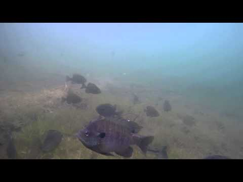 Quabbin 5 15 15 Under Dock