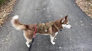 Basic Dog Sled Commands