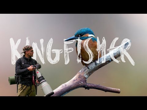 I SAW MY FAVORITE BIRD! Kingfisher VLOG #25 (With English Subtitles)
