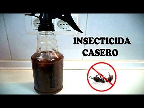 Como eliminar las hormigas con remedios caseros como for Casa del insecticida