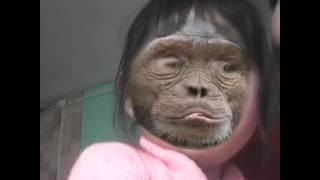 Страшная обезьяна