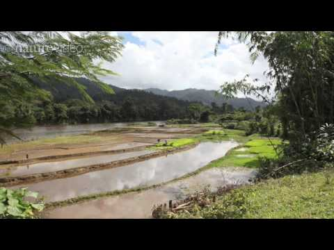 Climate change: Madagascar - by Nature Video
