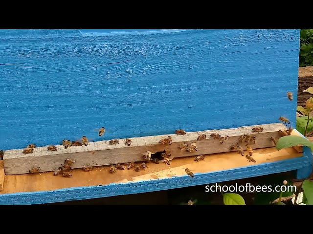 Bee Hive with Restricted Entry