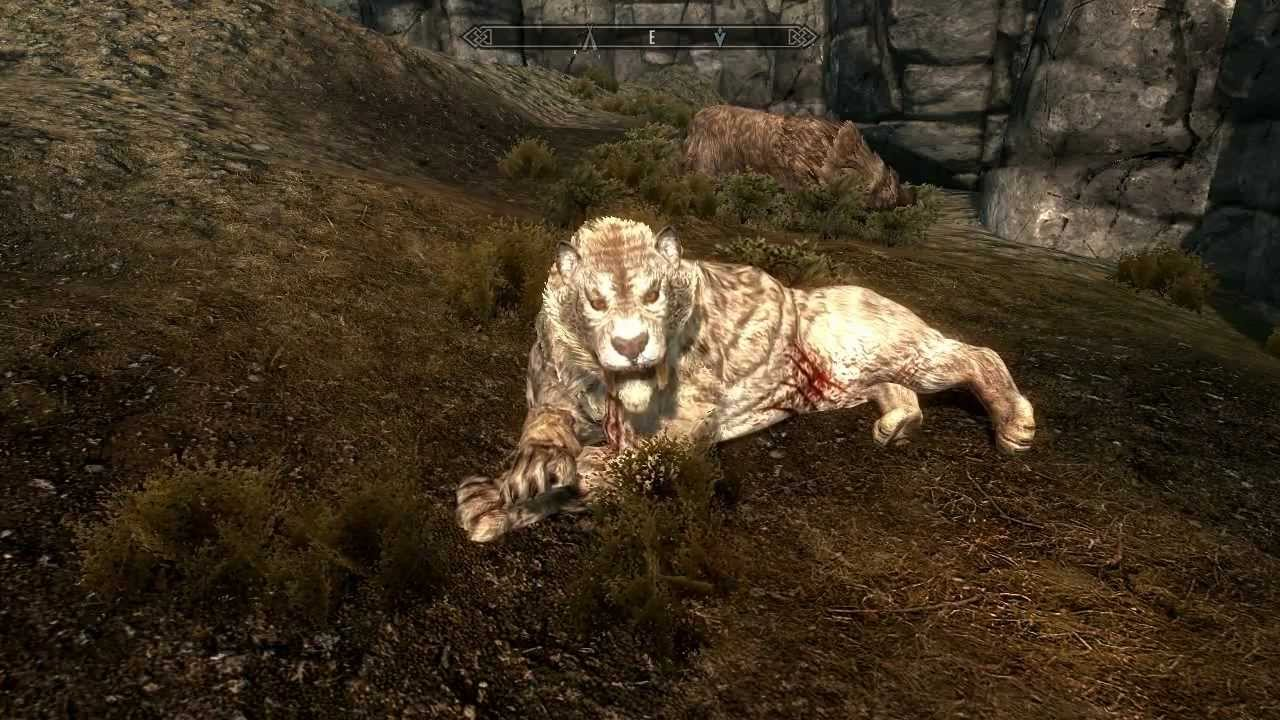 How To Get A Pet Dog In Skyrim