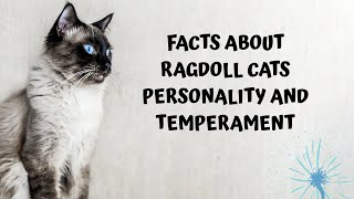 Facts about ragdoll cats personality and temperament