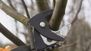 Cortar ramas para hacer estructuras de jardinería - Bricomanía