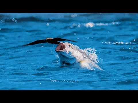Fish catches bird flying