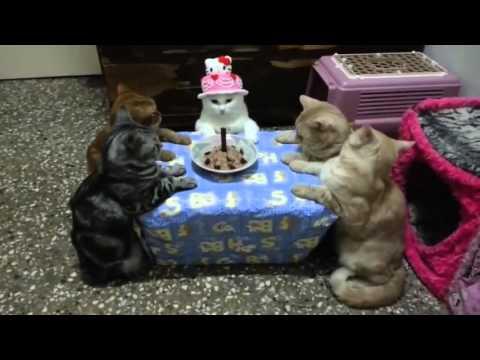 Un Chat fête son Anniversaire avec Style !