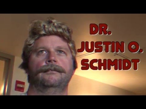 The Story of the Schmidt Sting Pain Index
