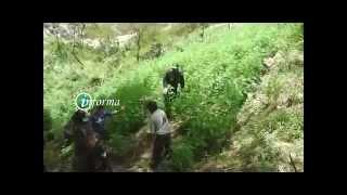 POLICIA INTERVIENE PLANTACIÓN DE MARIHUANA  EN MARCARÁ -ANCASH