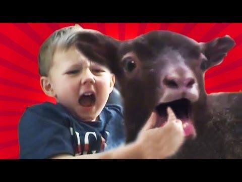 Charlie bit my finger (Goat remix)