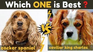Cocker Spaniel vs Cavalier king charles spaniel  Comparison Between Two Dogs Breed