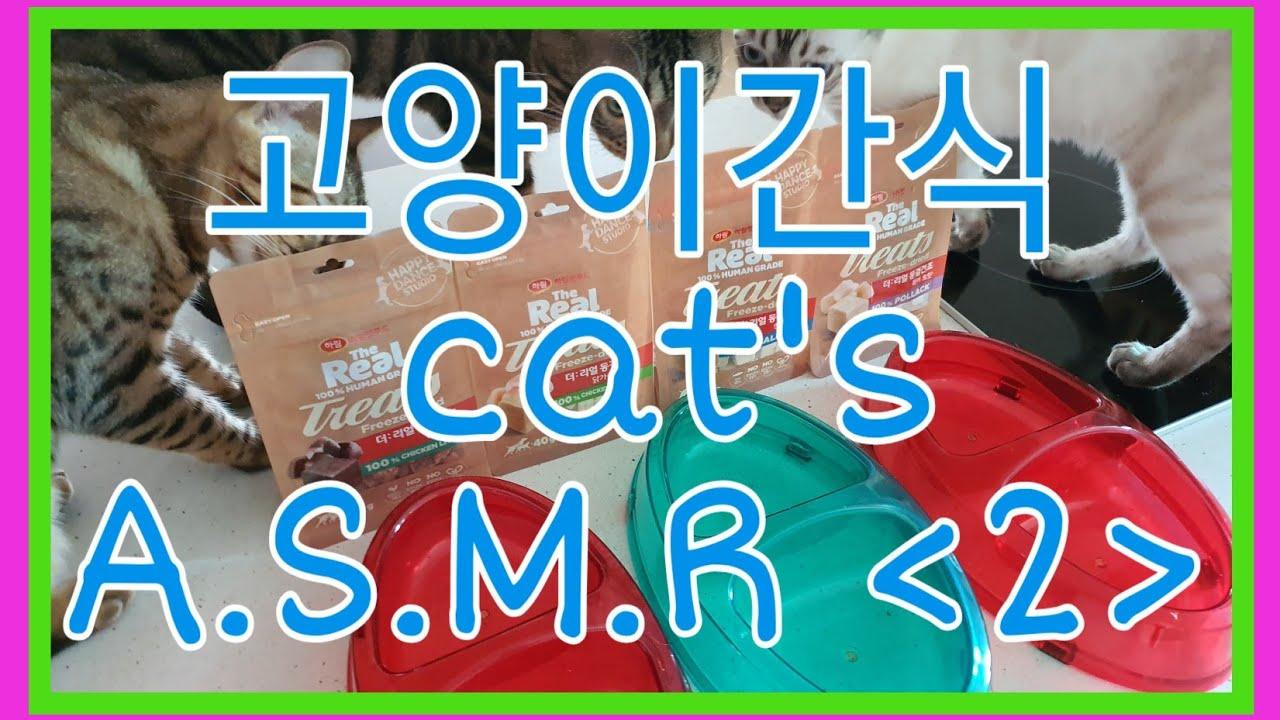 *꽁냥이네뱅갈* 고양이간식 ASMR 2탄 cat snack 猫のおやつ ขนมแมว  #트릿 #츄르 #asmr #뱅갈고양이