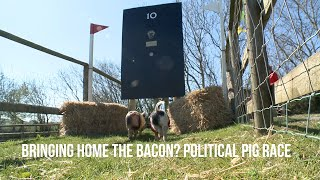 Pigs decide the 2019 British election result.