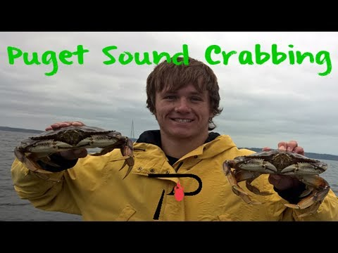 How To Crab In Washington's Puget Sound