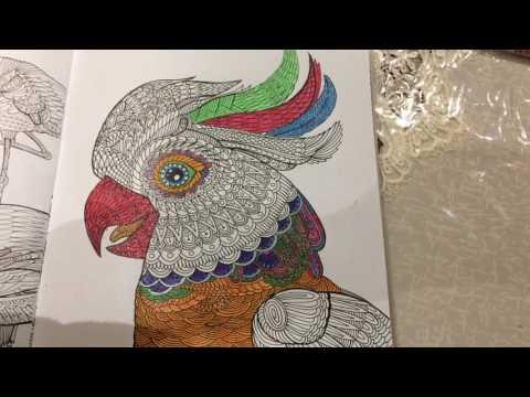 Раскраска эксентричный попугай Кеша Раскраски Попугай Кеша