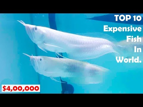 new-top-10-expensive-fish-in-world.-top-amazing-fish.