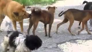 Откуда берутся бродячие собаки