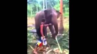 Elephant Wallops Annoying TouristVideo