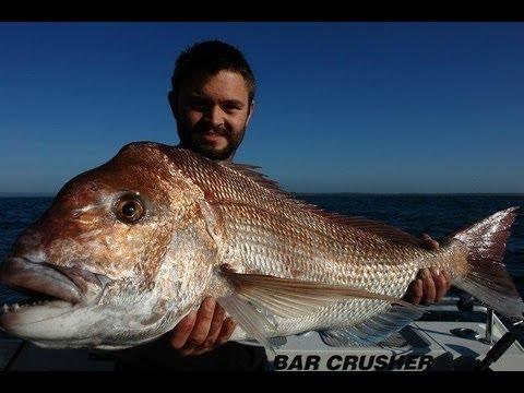 BIG SNAPPER BIGGER GUMMY - YouFishTV Australia