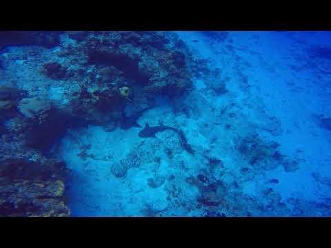 SWS customer videos | Chill'n sharks