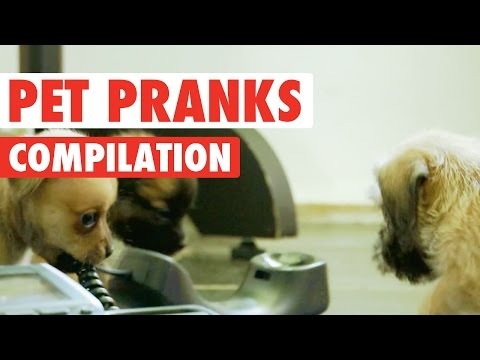 Pet Pranks || Funny Pet Compilation