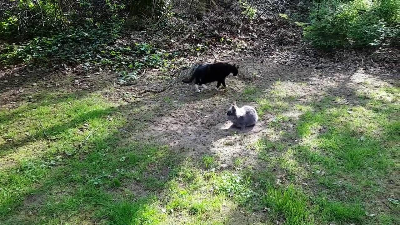 Kaninchen Und Katze Zusammen Im Garten