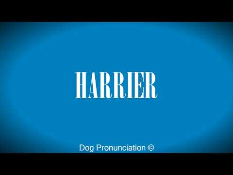 How to pronounce  HARRIER