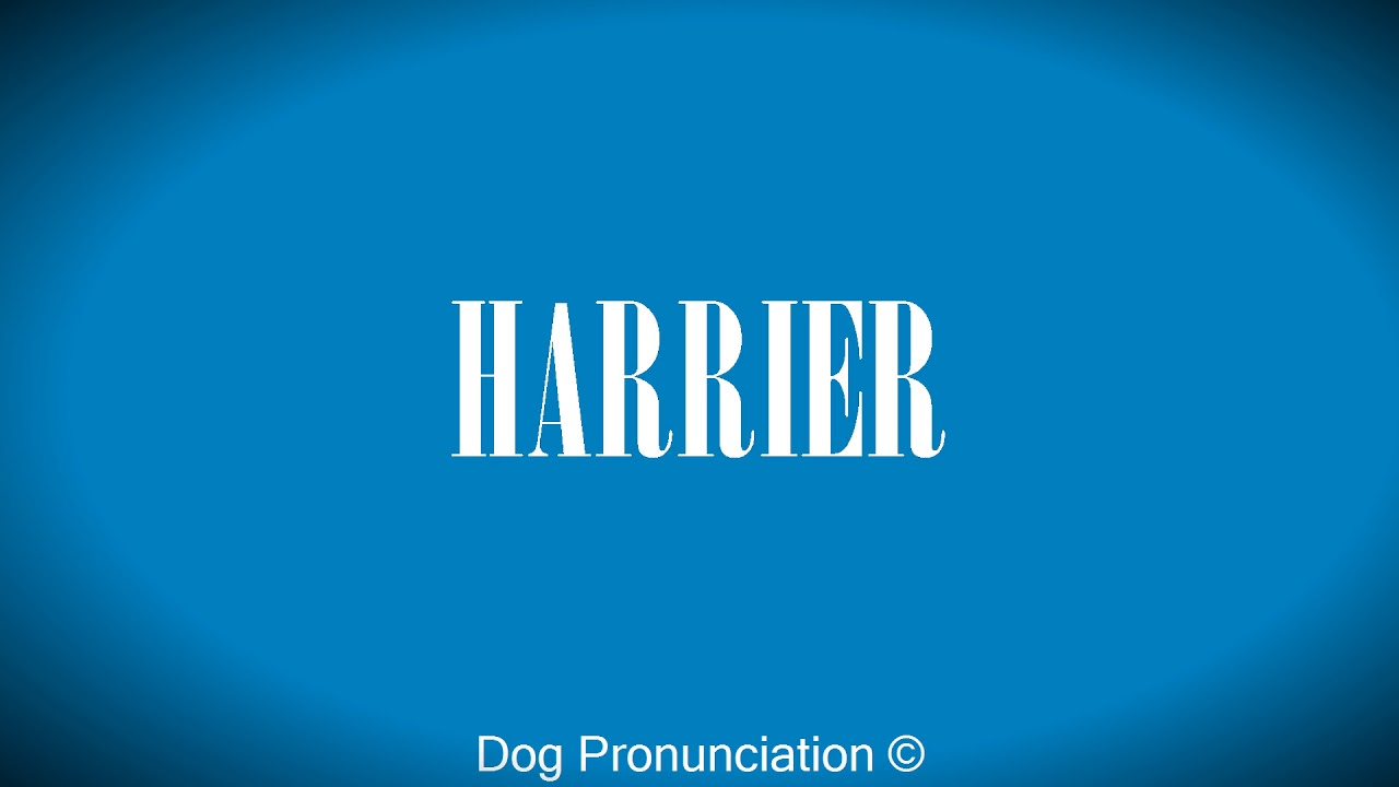How to pronounce harrier funnydog tv for Elle pronunciation