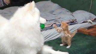 겁도 없이 까부는 아기 고양이