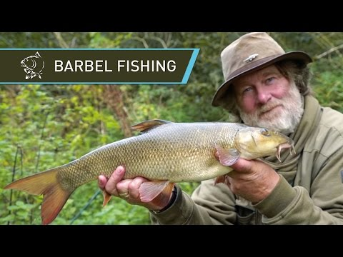 Barbel Fishing With Carp Gear