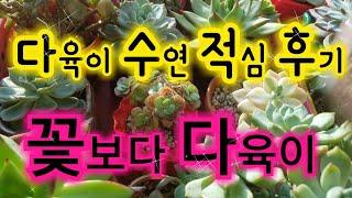 다육수연🌵적심 후기 (4월16일 적심한 수연 얼굴 ) 적심한 다육 얼굴 키우기 🌵🐌7층다육♥ Succulents 🐌