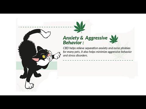 cbd-dog-separation-anxiety
