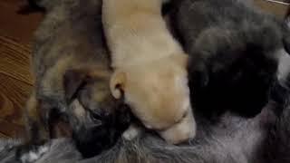 La-Vidaではいろいろな動物の保護を行っています。活動にご協力をよろし...