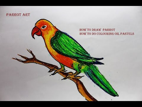 How To Draw A Parrot With Marker Pen And Color Pastel Easily Step By