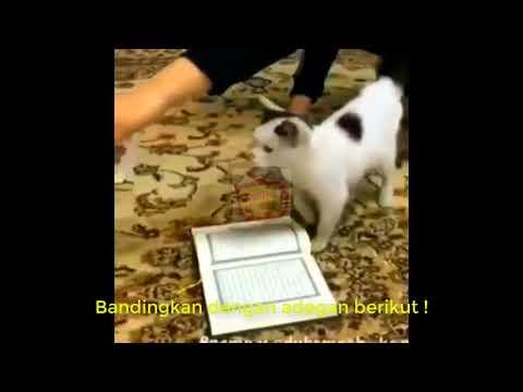 Cover Lagu SUBHANALLAH !!!  Kucing ini Tidak Mau Menginjak Al Quran -  Bukti Kesucian Al Quran HITSLAGU