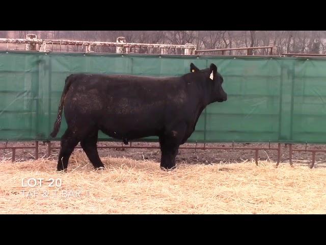 Taliaferro Angus \u0026 T Bar T Angus Ranch - 20